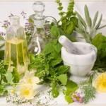 Лекарственные травы - основа многих лактогонных средств