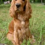 Милая собачка, чьи ушки никак не ассоциируются с женской грудью